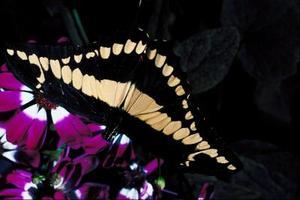 гусеницы, caterpillars
