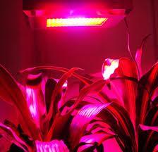 growing lights, лампы для выращивания
