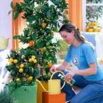Правда о цитрусовых, раст...